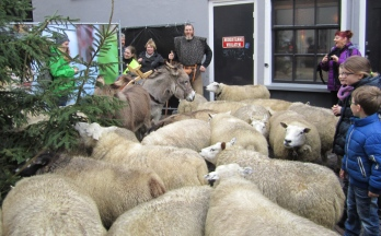 Sheep, left unattended, eat Christmas trees